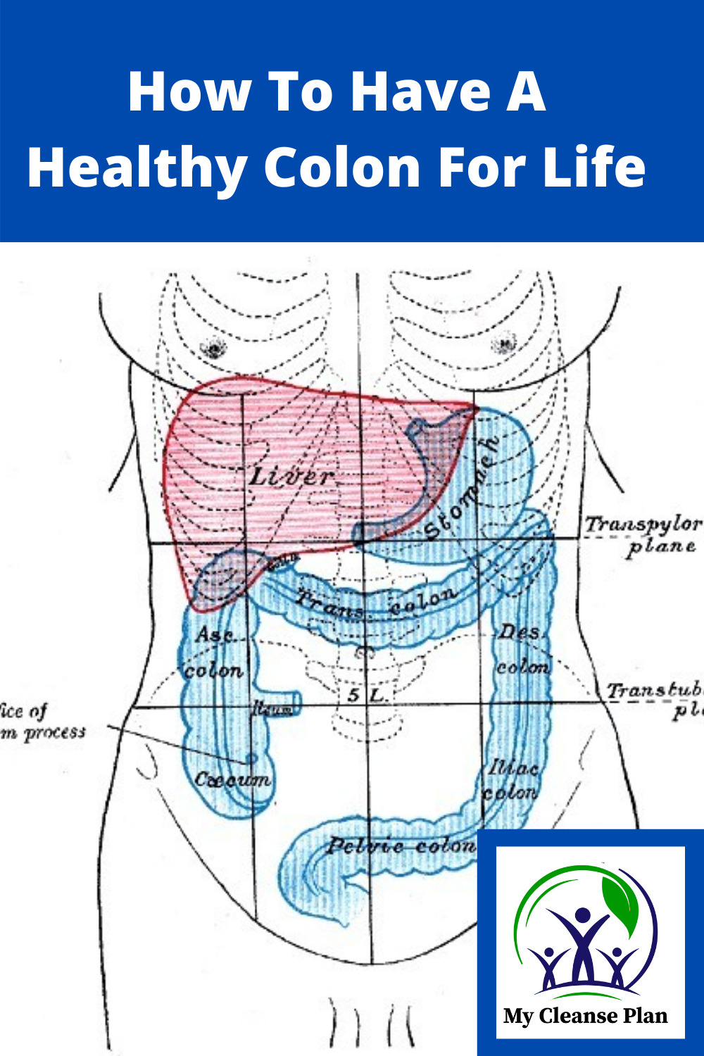 How To Have A Healthy Colon For Life
