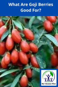 What Are Goji Berries Good For
